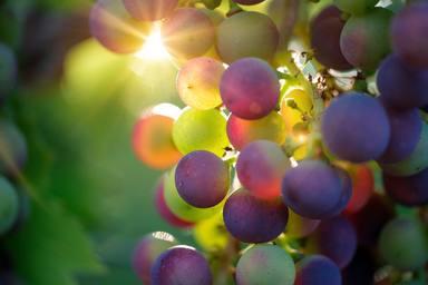 Tres vins espanyols entre els 30 millors del món