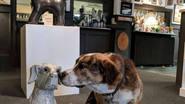 "Reabre el primer ""Museum of Dog"" en New York"