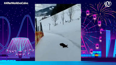 Así reacciona un perrito al llegar a la nieve