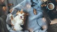 ¿De verdad creías que lo sabías todo sobre los gatos?