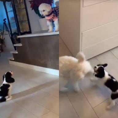 Paz Padilla pide ayuda para que sus dos mascotas se lleven bien