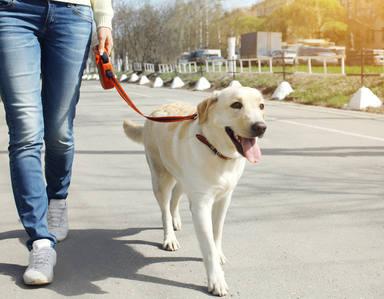 Los 5 errores que cometes al pasear a tu perro cada día