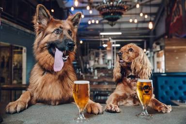 Cates de cerveses... per a gossos