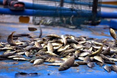 El pescado azul es un alimento rico en vitamina d