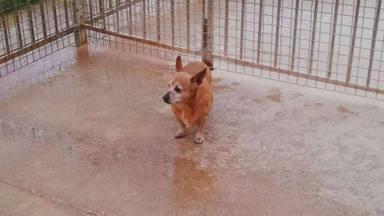 Xula, la perrita que fue adoptada durante el confinamiento gracias a un ángel de la guarda