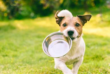 Es malo dar de comer a los perros comida de personas