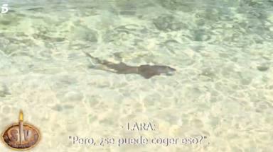 Tensión en Supervivientes: los concursantes, en peligro por la temida llegada de un tiburón a sus aguas