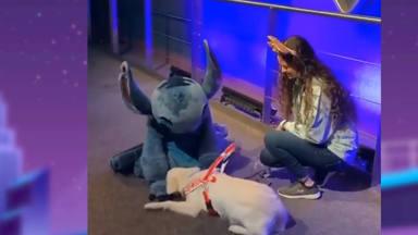 El encuentro de un perrito con su ídolo Disney
