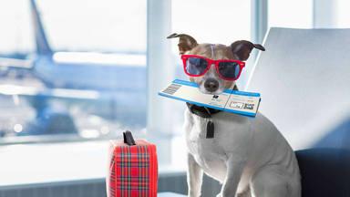 Claves para viajar con tu mascota