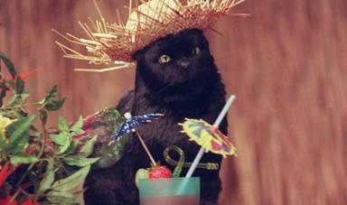 Salem, gato de Sabrina, cosas de brujas