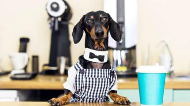 Nace la primera cafetería con cachorros en adopción