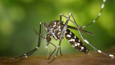 Las cuatro picaduras de insectos que deben preocuparte este verano