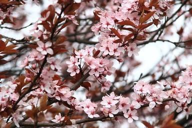 Un febrer amb temperatures primaverals