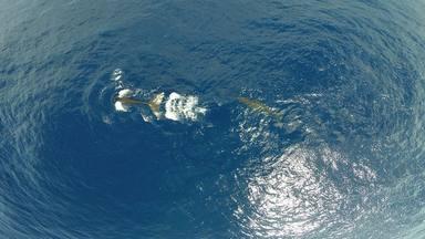 Menys cetacis a les nostres costes