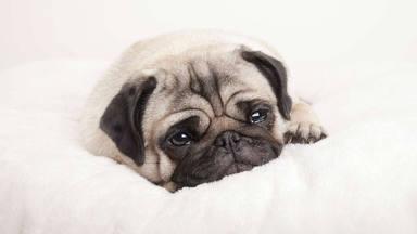 Los trucos infalibles para que tu perro no llore por la noche y duerma plácidamente