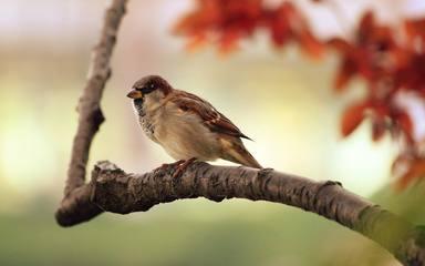 Observar aus porta la felicitat segons un estudi