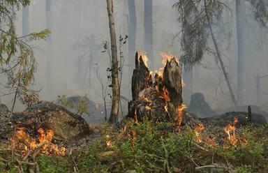 Se prohiben hasta el 15 de octubre las barbacoas y quemas agrícolas en los espacios forestales de Andalucía