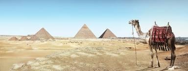 Egipte prohibirà les passejades en camell i cavall per visitar les piràmides de Giza