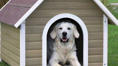 Te contamos cuáles son las diez razas de perros más inteligentes