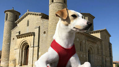 Pipper, el perro influencer viajero
