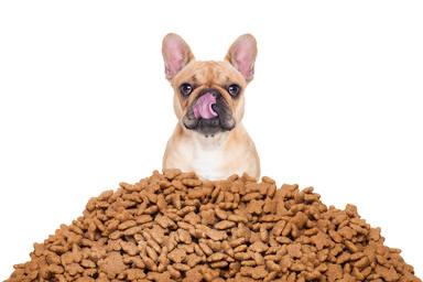 Los perros se quedan ciegos si comen azúcar