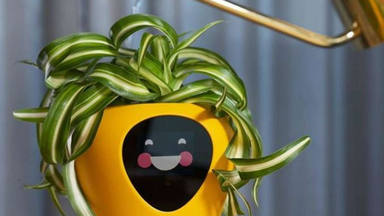 Una maceta que te avisa si está feliz, triste o tiene sed: el nuevo invento del mercado