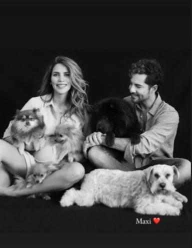 Muere Maxi, el perro de David Bisbal