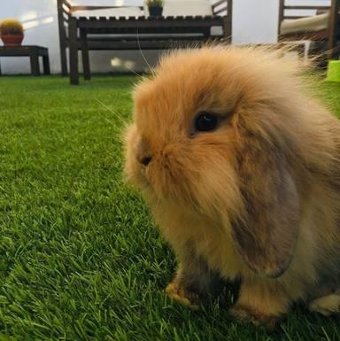 Chewbacca, el conejo que tiene en casa Efecto Mariposa