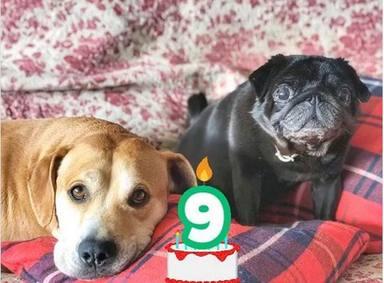 Buyo y Carapapa, los perros de Dani Rovira, cumple 9 años
