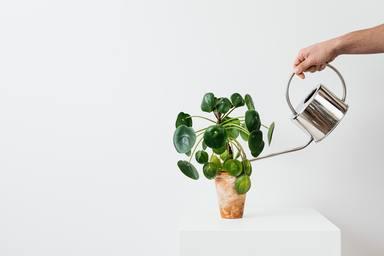 Com regar les plantes en vacances?