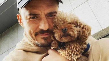 """El bonito homenaje de Orlando Bloom a su perro, Mighty: """"Era más que un compañero"""""""