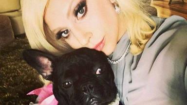 """El horrible momento que ha vivido lady Gaga: """"Un secuestro de perros y un disparo"""""""